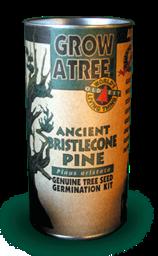 Bristlecone Pine 256px