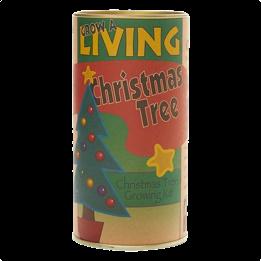 Jedle balzámová - Vánoční strom
